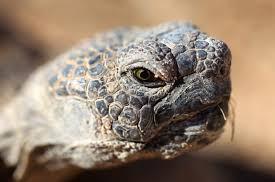 tortoise wikimedia.org images