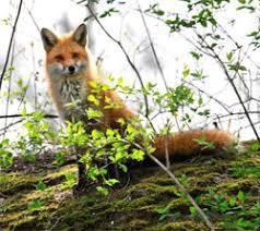 fox in.gov download