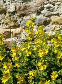 Scotland flower 36064162_10212070518143108_7914506802375426048_n