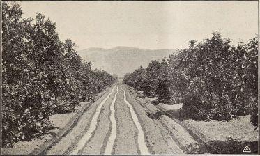 armstrong_nurseries_(1909)_(14784771735)