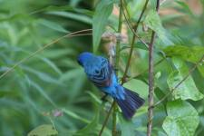 RB blue bird10995577_10205387804827711_5320815470204216448_n