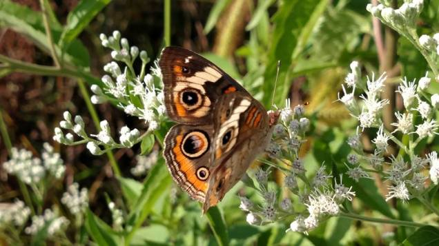 RB Butterfly 40094008_10214396474838831_2504180544493846528_n