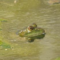 RB frog eyes 31064269_10213493380902047_5134484607520997376_n